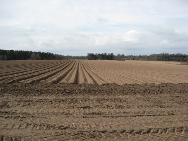 Thoresby Park Estate - Newly laid out potato ridges
