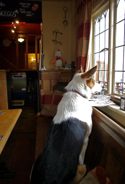 Shropshire Bridges Inn Dog Friendly