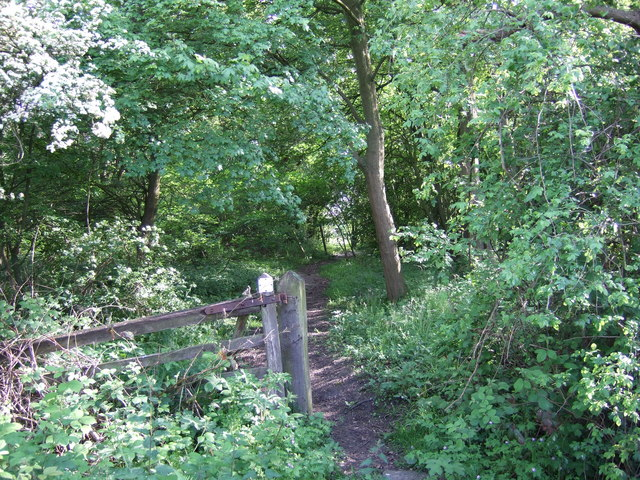 Footpath on Bunny Hill