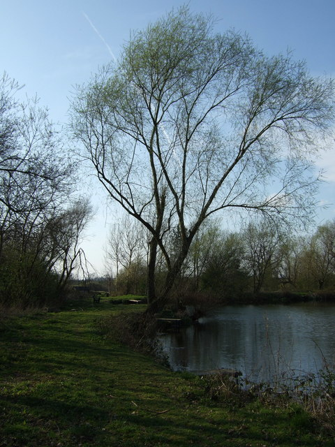 Fish Pond at St Peter in the Rushes