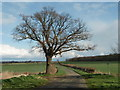 TL1180 : Oak Tree on the Hamerton Road by Michael Trolove