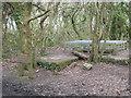 SW7343 : Mine shaft in Unity Wood by Rod Allday