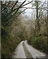 SX0768 : The Road past Whitley Wood by Tony Atkin