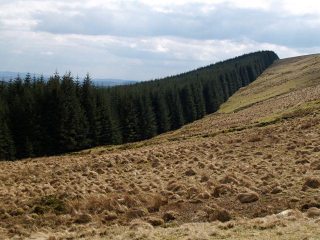 Forest edge, White Shank
