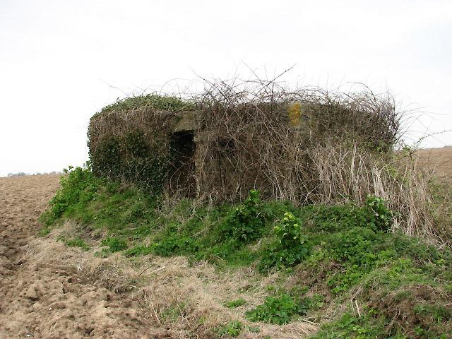 Overgrown WWII pillbox