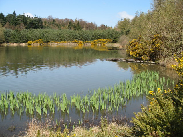 Pond in Blubbery Wood