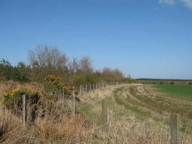 Field margin near Longhirst golf club