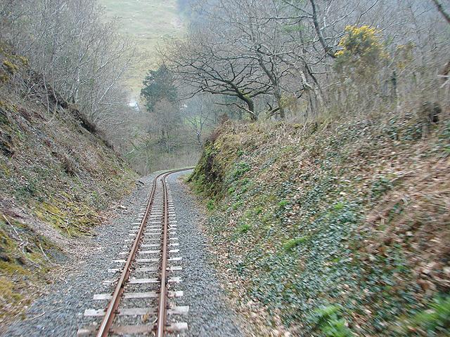 Woodland at Cnwch yr Arian