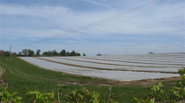 Soanes Farm