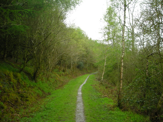 Lower Forest near Lampeter