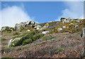 SW4524 : Granite cliffs above Lamorna Cove by Pauline E