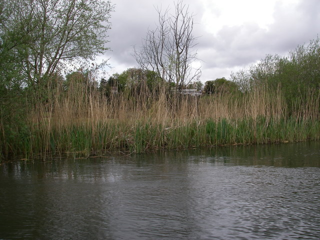 Avon river bank