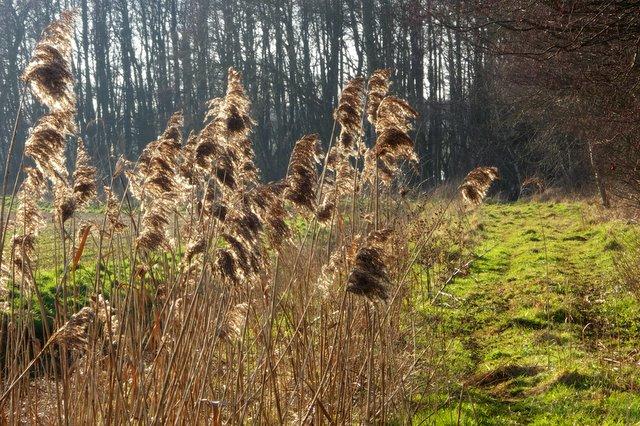 Woodland edge path near Ampton Water