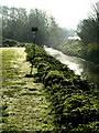 TA1828 : Early Morning Dew next to Burstwick Drain : Week 17