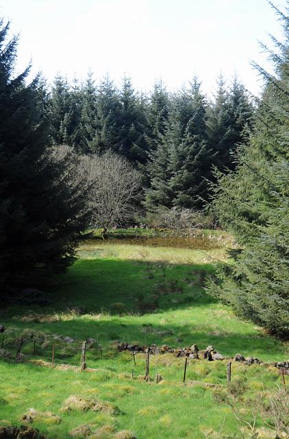 Unnamed Lochan in Clow Hill Wood