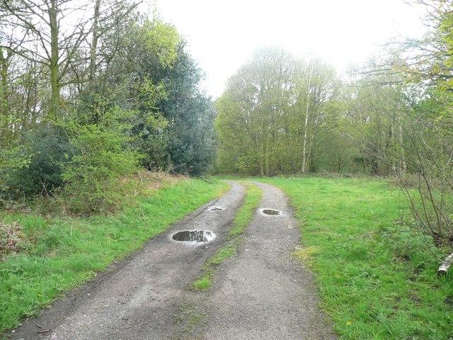 Track into Cawthorne Park woodlands, Upper Field Lane, High Hoyland