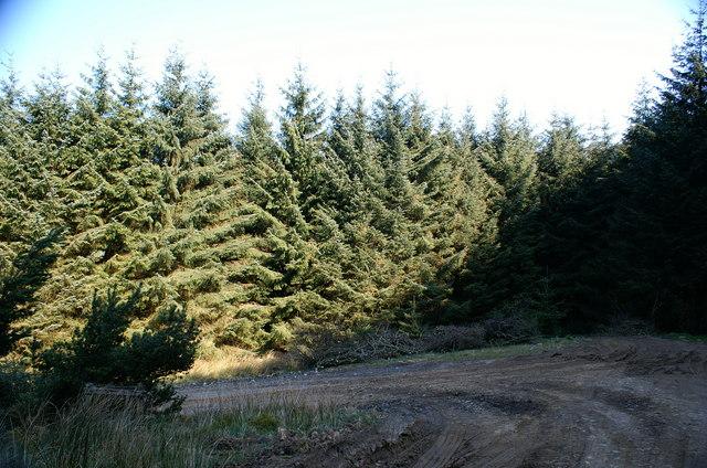 Flatt Forest Tracks