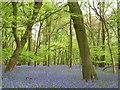 SU7579 : High Wood, Harpsden by Andrew Smith