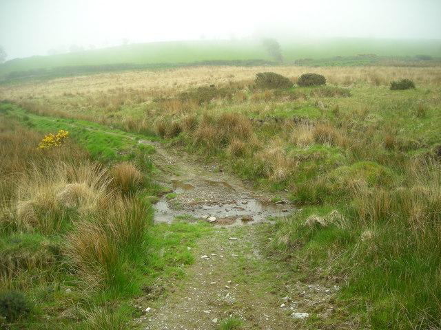 Rough pasture above Pont Creuddyn
