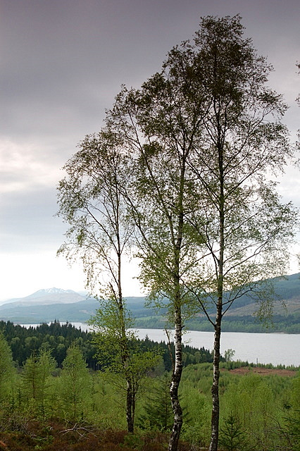 Forest above Loch Garry