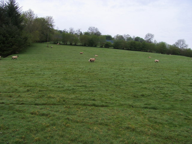 Field below Rhiwrfran Farm