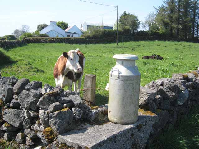Cow and milk churn, Newtownmanor