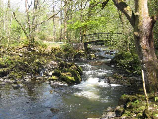 Milltown Woods