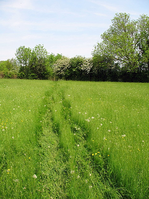 Learn french online memory tips to improve your recall by for Like long grasses