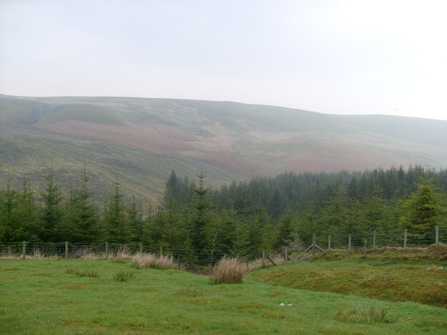 Cefn Garw, forest edge