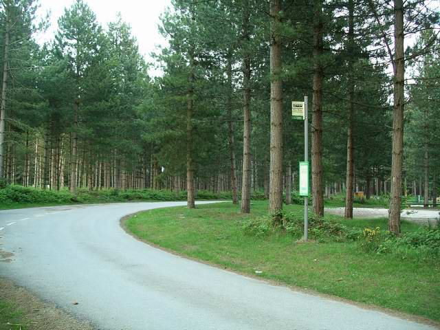 Bus stop in the forest