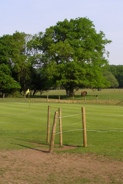 Fenced green, Bramshaw Golf Course, New Forest