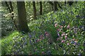 NZ5712 : Bluebells and Red Campion, Newton Woods : Week 20