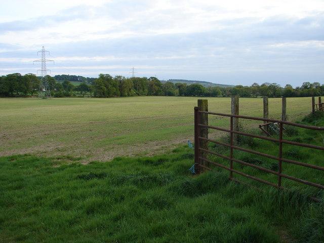 Field Near Huttonread Stud