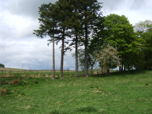 Trees by old Deeside Railway