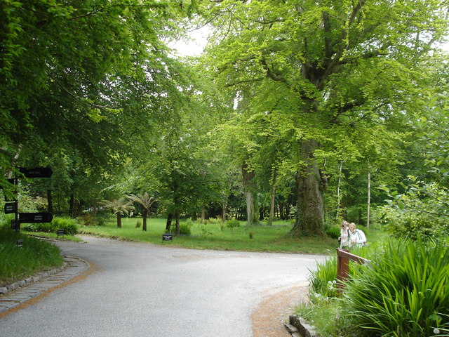 The avenue at Lissadell House