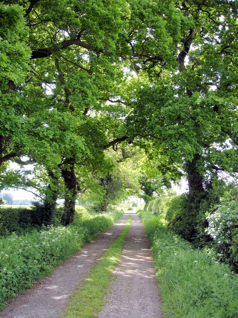 Warmingham - Moss Lane
