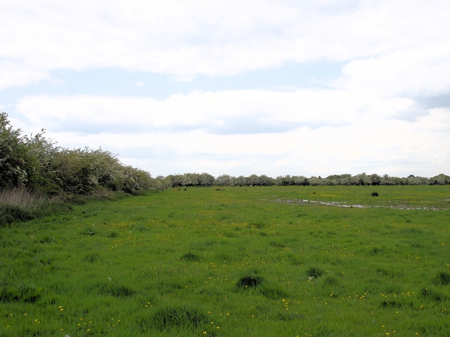 Warmingham Moss