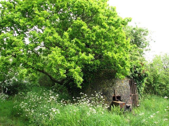Moy's drainage mill - hidden under vegetation