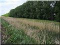 TL4686 : Vermunden's drain near Welches Dam by Shaun Ferguson