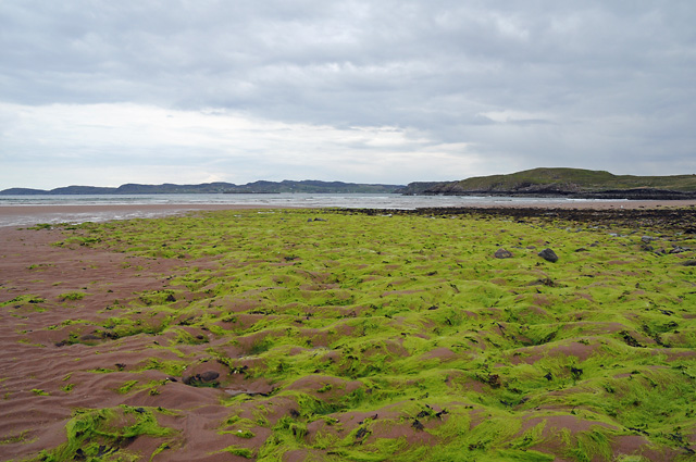 Seaweed on the Beach at Firemore