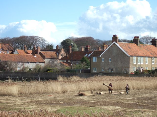 Cutting the reeds beds at Cley next the Sea