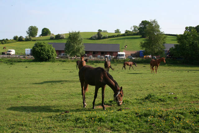 Horses by Brook House Stud, Bulkeley