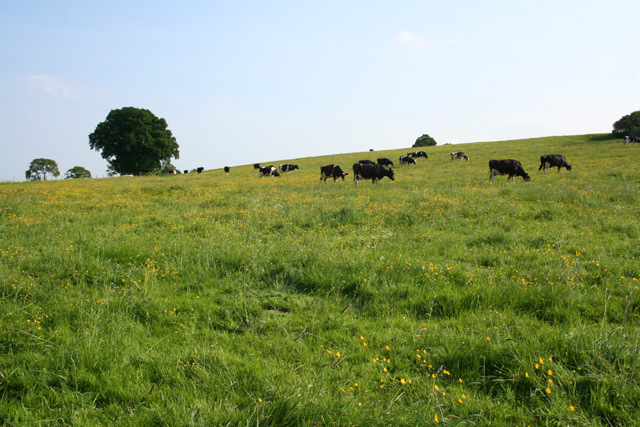 Sloping pasture south west of Bulkeley