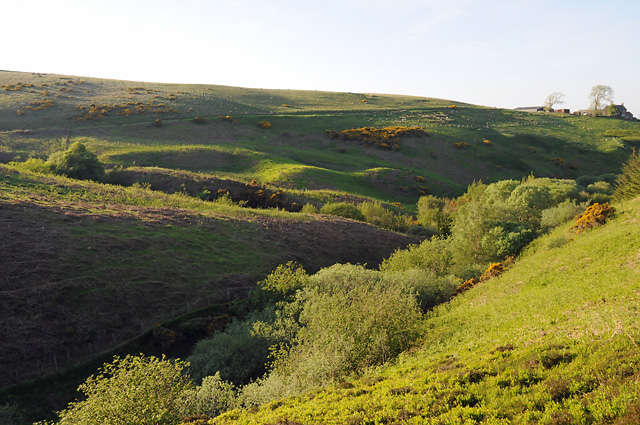 Grazing Land on Casken Hill above the Thorter Burn