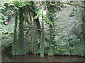 SE0324 : Luddendenfoot jungle by John Illingworth