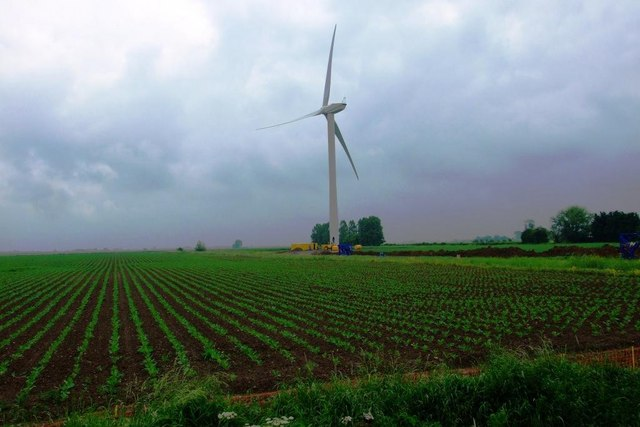 Brassicas below turbine