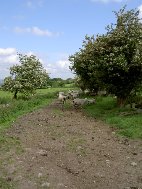 Bridleway on slopes of Hope Mountain.