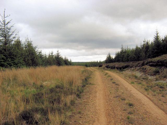Cnoc nan airigh Forest Walk.