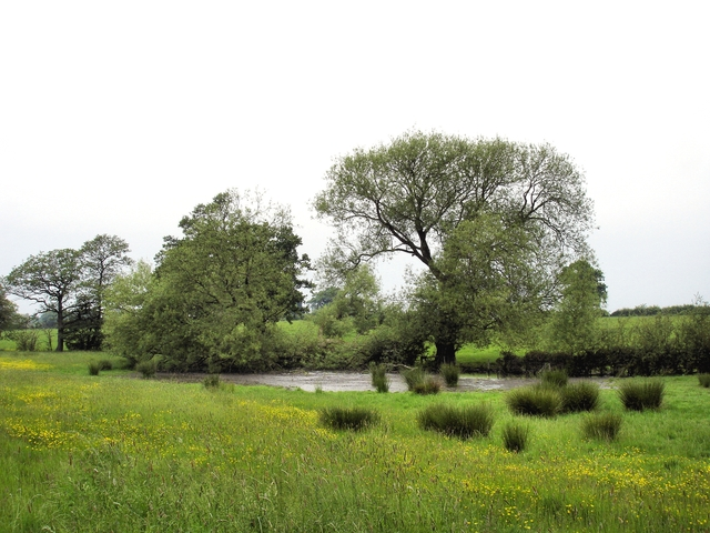 Meadow and pond near Painters Green