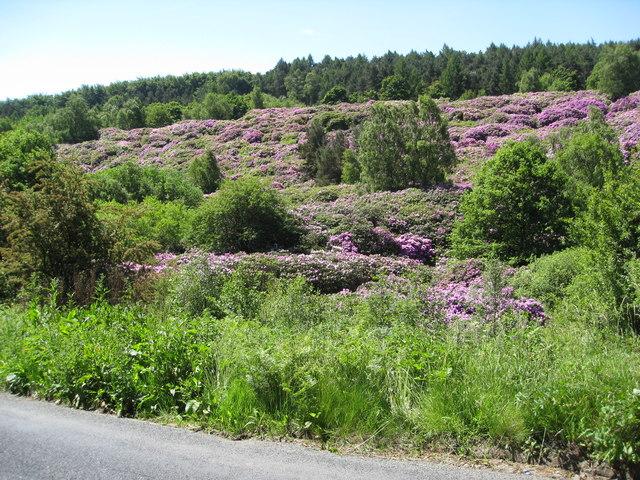 Horsleygate Road (B6051) View